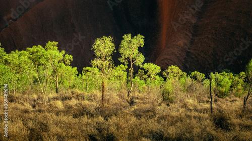 Obraz panoramic detail bushes in Australia - fototapety do salonu