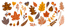 Autumn Doodle Floral Design Vector Elements. Flower And Autumn Leaves Hand Drawn Design For Cover, Ads, Wallpaper And Background