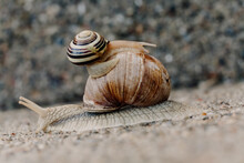 Two Snails Moving In Different...