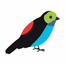 Paradise Tanager Bird Illustration. Vector Illustration Isolated.