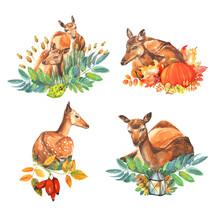 5 Red Cute Deers Lying In The ...