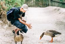 Teenage Boy Feeding Geese - Le...