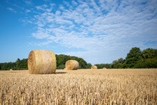 On  Mown Grain Field Lie Round Pressed Bales Of Straw And The Sky Is Blue