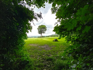 View between two trees, of a single tree, on farmland, with trees and fields, in the distance in, Calverley, Leeds, UK