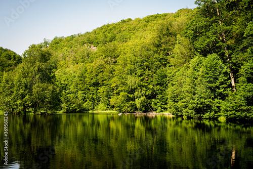 Fototapeta Reflecting trees obraz na płótnie