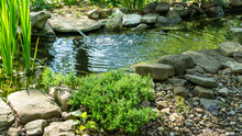 Beautiful Small Garden Pond With Frog-shaped Fountain And Stone Shores. Original Creeping Juniperus Procumbens Nana On Stones By Pond Shore. Selective Focus. Nature Concept For Design