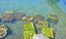 Green Algae In The Water Near The Sea Coast. Unusual Beautiful Square-shaped Seaweed.