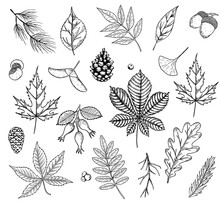 Autumn Vector Set With Leaves,...