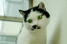 Black And White Green-eyed Cat