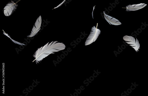 Group of a white feathers bird floating in the dark Canvas Print