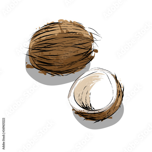 Hand drawn Natural coconut nuts, chopped and whole Fototapeta