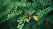 Red Bug Sitting On Fresh Green...