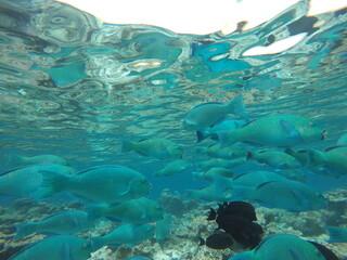 Fototapeta na wymiar Malediven Fische