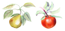 Vintage Set With Pear And Apple Branches Watercolor Illustration On A White Background