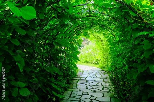 Fototapeta Pergola  zielony-tunel