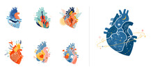 Collection Of Anatomical Heart...