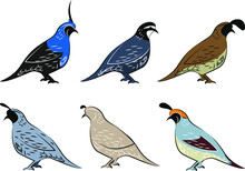 Collection Of Different Birds ...