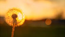 MACRO: Golden Summer Sunset Il...