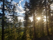 View Over Bassenthwaite Lake Through Forest, Lake District National Park