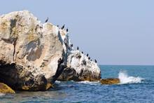 Cormorants On Higher Rock Of Azov In Ukraine
