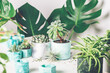 Planting succulent plant in the new marbled color planter, turquoise blue or green mint color, the process of creation of the indoor garden