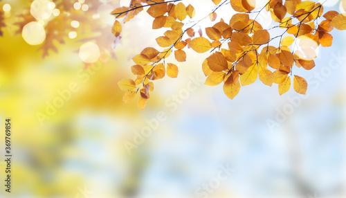 Fototapeta Vibrant fall foliage obraz na płótnie