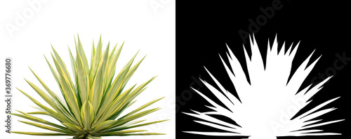 Canvas Print Ornamental Sansevieria plant. Clipping mask included.
