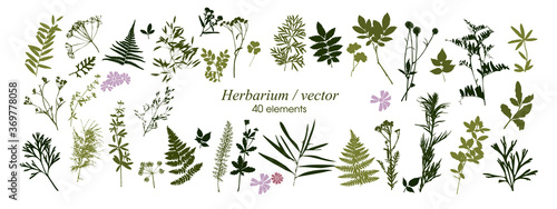 Set of silhouettes of botanical elements Fototapet