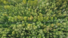 View Of The Green Forest From ...