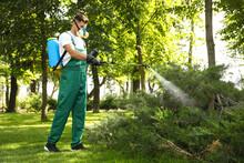 Worker Spraying Pesticide Onto Green Bush Outdoors. Pest Control