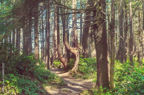 Obraz Vancouver forest - fototapety do salonu