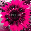 canvas print picture - Choose to shine, a vibrantly pink sunflower, photographed in Bloemfontein, South Africa