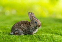 Rabbit On A Green Grass In Summer Day. Cute Little Easter Bunny In The Meadow. Green Grass Under The Sunbeams. Little Hare Sitting In The Grass.