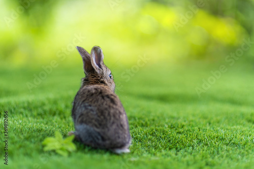view from back of rabbit on a green grass in summer day Canvas-taulu