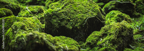Canvas Print Beautiful Bright Green moss grown up cover the rough stones and on the floor in the forest