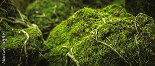 Fotografie, Obraz Beautiful Bright Green moss grown up cover the rough stones and on the floor in the forest