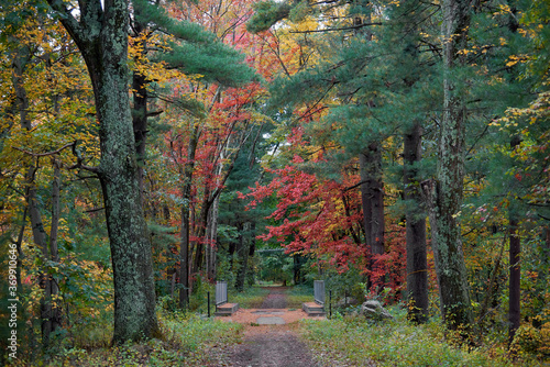 Path in a forest in Massachusetts, USA Canvas Print