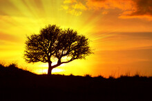 Silhouette Of A Tree At Sunset With A Radiant Light Behind