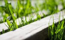 Green Grass Between Wooden Pla...