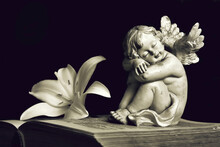 Angel And White Lily Flower On Open Book Isolated On Black Background