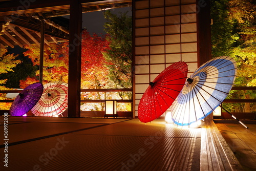 Obraz na plátně 秋の京都・勝林寺の紅葉ライトアップと和傘