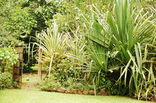Garden Landscaping At Habitat Butterflies Conservation Center In Bohol, Philippines.