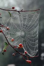 Close Up Of A Dew-covered Spider Web In A Tree