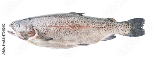 Valokuvatapetti Trout on white background, isolated. The view from top