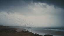Hundreds Of Birds Flying Over Stormy Beach