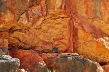 Endangered Rock Wallaby Sittin...