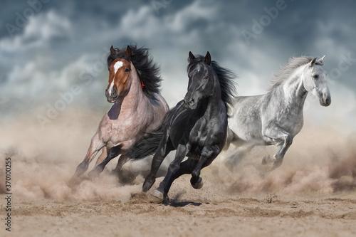Fototapety, obrazy: Horse herd  galloping on sandy dust against sky