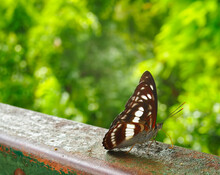 A Butterfly On The Bar With Green Tree In The Background