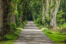 Narrow Straight Asphalt Road N...