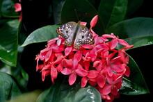 Mariposa Colorida Posada En Fl...